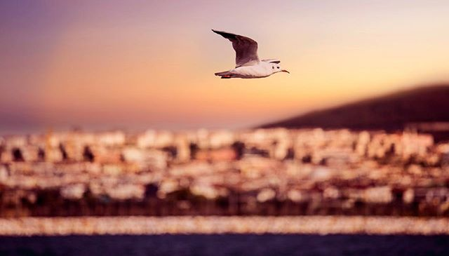 Uzaklara gitmek, denizler, sınırlar, ülkeler, inançlar aşmak fırsatı çıktığı zaman hiç duraksama! Amin Maalouf⠀